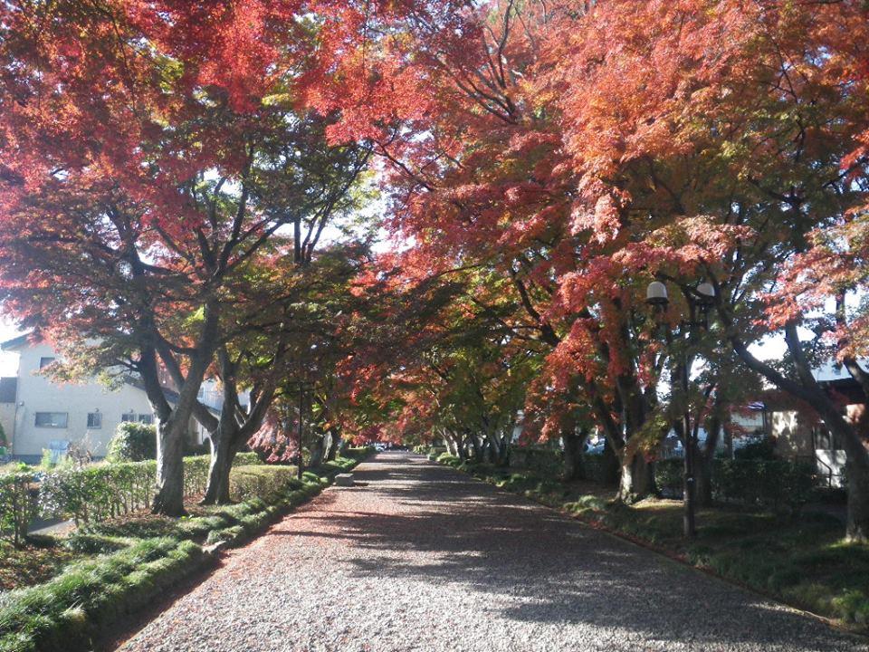 大山参道の紅葉が見頃です♪