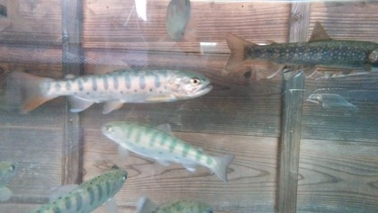 塩原温泉 『お魚クイズ』