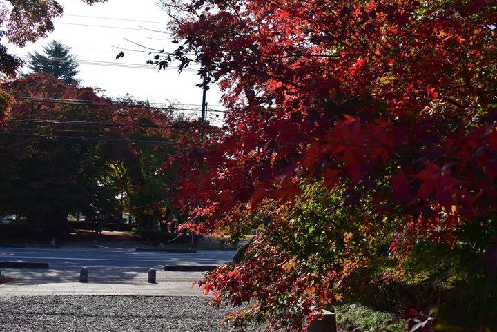 いよいよ那須塩原市内でも紅葉が平野部に降りてきました!