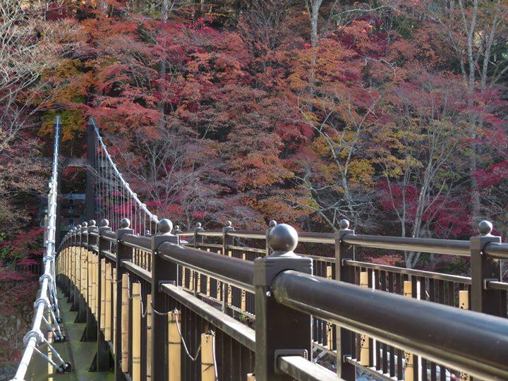 今日の紅の吊橋です☺️