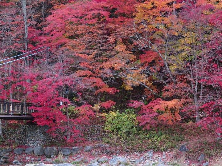 紅の吊橋は、まだまだ紅葉を楽しめますよ。