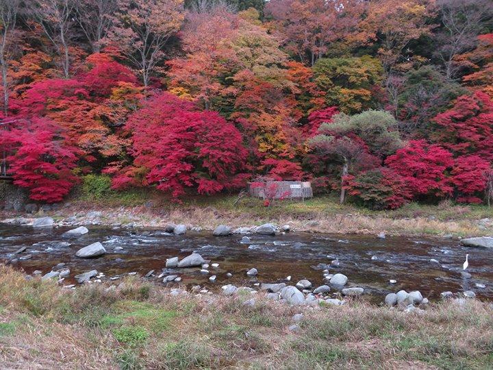 本日も、塩原温泉の紅葉は絶好の見頃です。