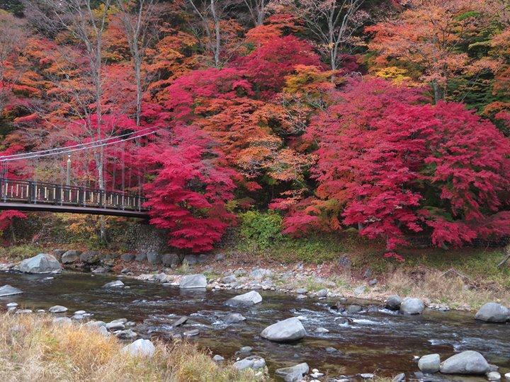 紅の吊橋、今が見頃のピークです‼️