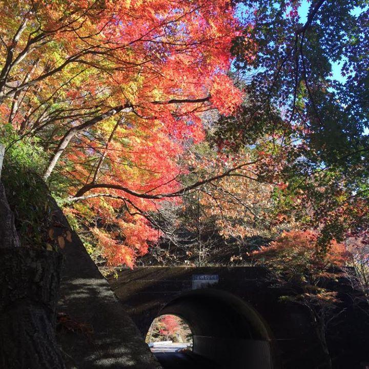 温泉街の紅葉は、いよいよクライマックスへ。