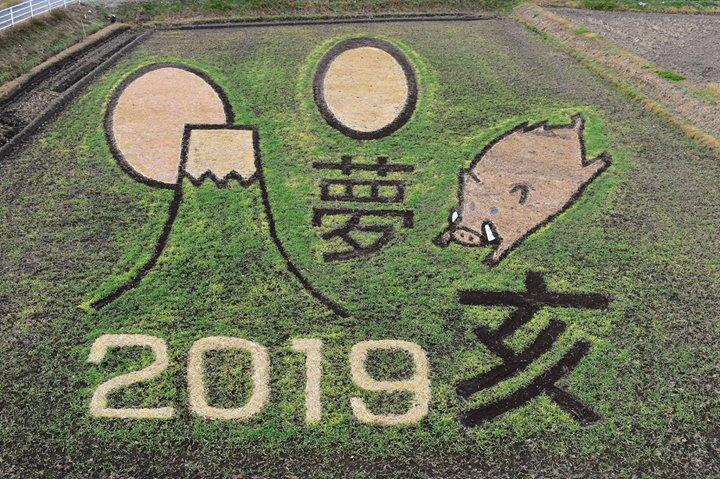 来年の干支、猪の畑アートです