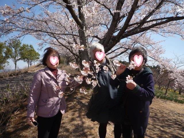 市内の桜は絶賛満開中!東那須野公園では斜面いっぱいの水仙と桜が楽しめます