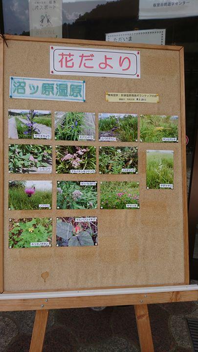 沼ツ原湿原 8月21日現在『開花情報』